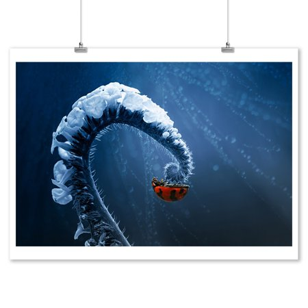 Ladybug on Frozen Fern - Lantern Press Photography (9x12 Art Print, Wall Decor Travel Poster) (Frozen Decor)