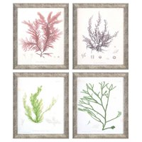 Paragon Seaweed I Framed Wall Art - Set of 4