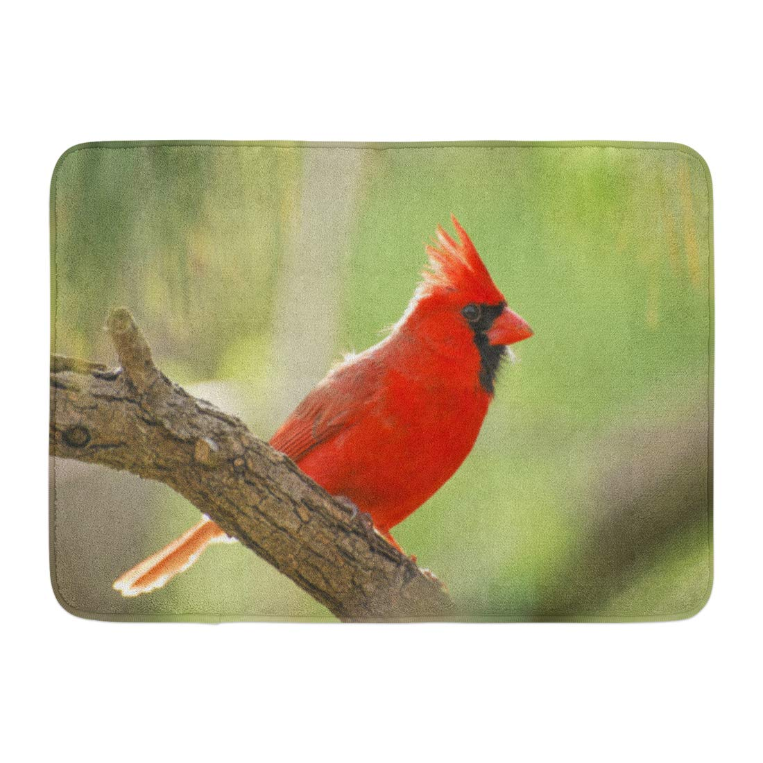 GODPOK North Black Branch Red Male Northern Cardinal Against Green Adult American Rug Doormat Bath Mat 23.6x15.7 inch
