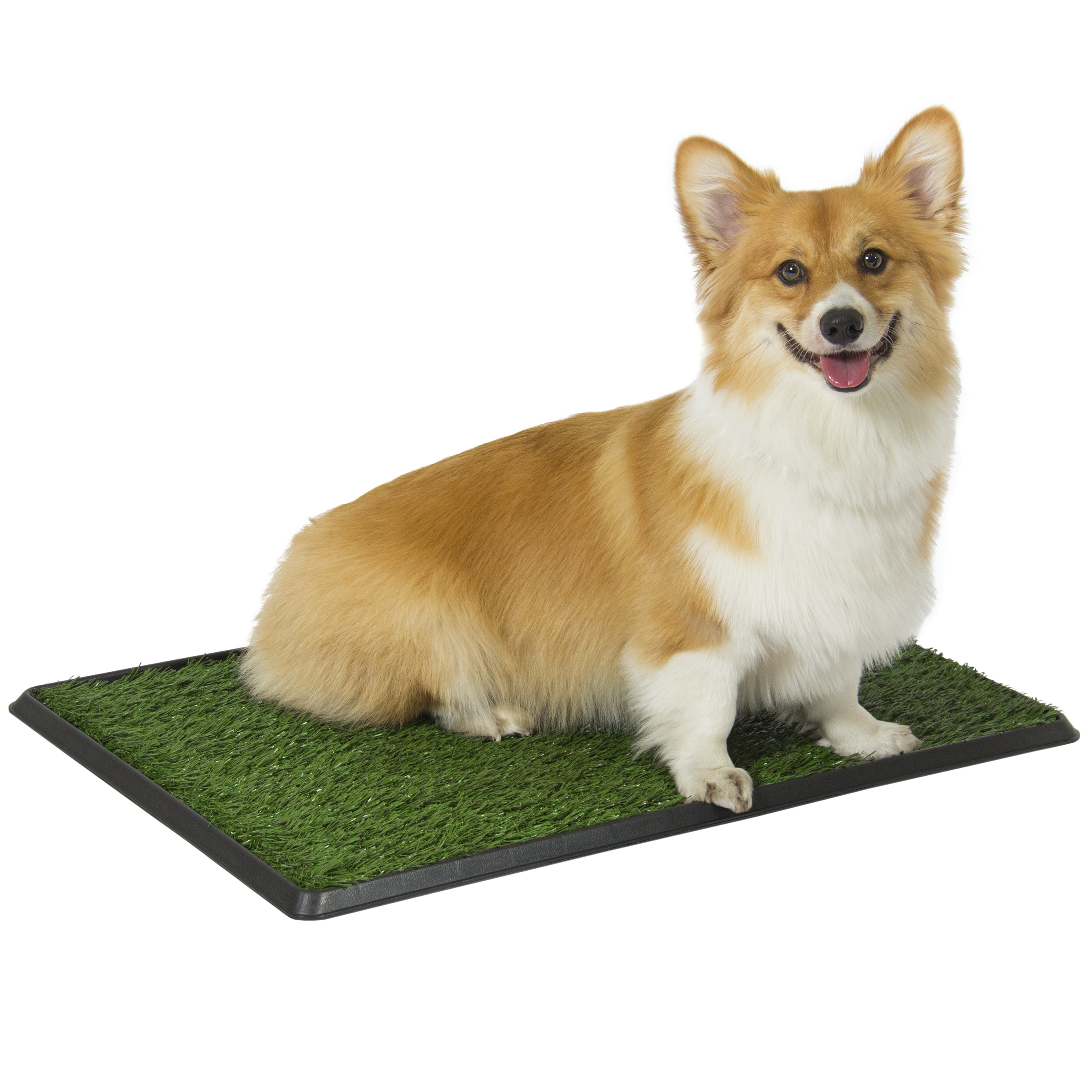 how to get dog pee out of carpet pad