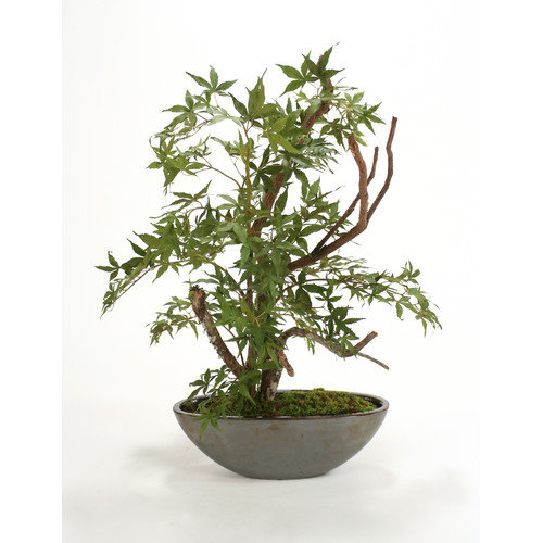 Distinctive Designs Silk Japanese Maple Bonsai Tree in Bowl