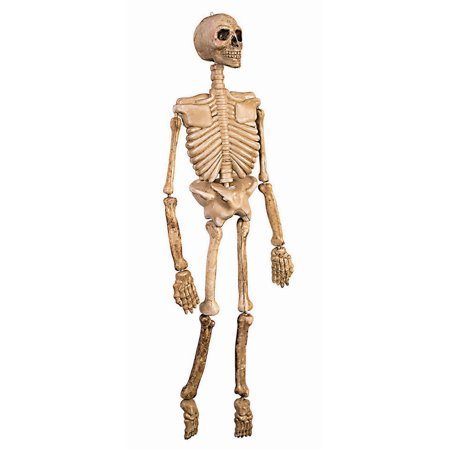 Skeleton Prop Halloween Decoration - Clip Art Halloween Skeleton
