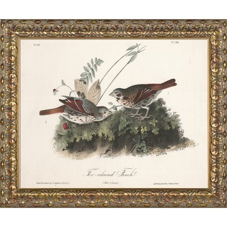 La Pastiche 'Fox-Coloured Finch' Framed Painting Print on