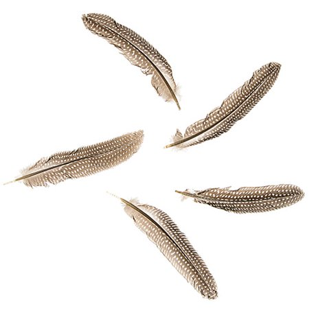 Decorate your exotic crafts with these guinea plumage quills. The white-spotted brown feathers add a natural look to your DIY dream catcher or headpiece. - Diy Mermaid Headpiece