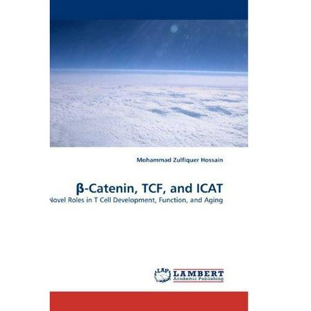 Catenin  Tcf  And Icat