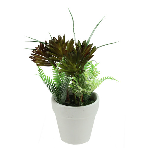 Northlight Seasonal Artificial Succulent and Fern Spring Decoration Desk Top Plant in Pot