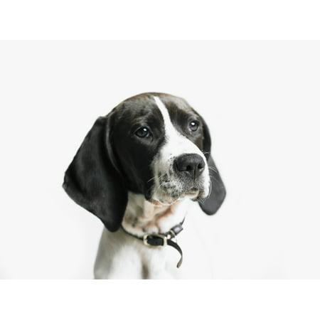 Posterazzi Portrait of a dog Canvas Art - Eric Kulin  Design Pics (34 x 26) ()