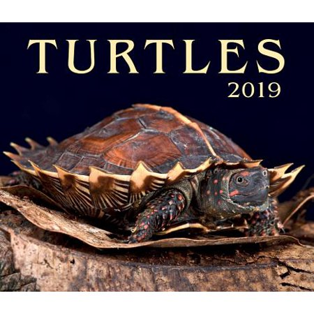 Turtles 2019 (Other)