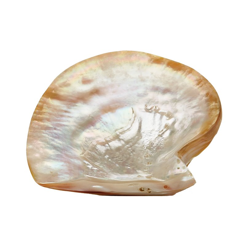 Dimond Home Pearl Shell Plate 784084