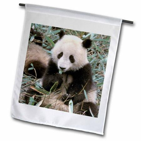 Image of 3dRose China, Chengdu, Panda Sanctuary, Panda bear-AS07 CMI0105 - Cindy Miller Hopkins - Garden Flag, 12 by 18-inch