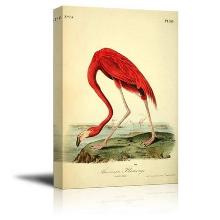 wall26 Beautiful Illustration of a American Flamingo by John James Audubon - Canvas Art Home Decor - 32x48 (James S Flamingo)
