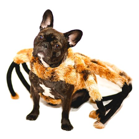 Spider Costumes For Dogs (Spider Tarantula Dog Costume Mutant Halloween Pet Costume TarantuLucy Furry)