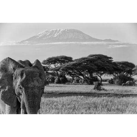 Five Elephants - LAMINATED POSTER Big Five Kilimanjaro African Bush Elephant Africa Poster Print 24 x 36