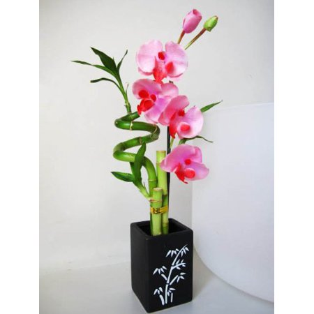 9GreenBox - Lucky Bamboo - Spiral Style with Artificial Flowers and Ceramic Vase ()