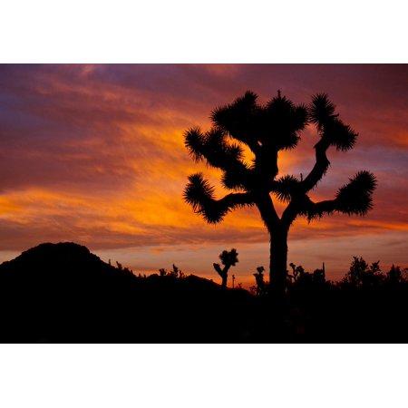 Canvas Print Desert Joshua Trees Sunset Landscape Silhouettes Stretched Canvas 10 x 14