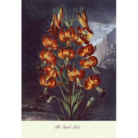 Superb Lily (The Superb Lily Fine art canvas print (20
