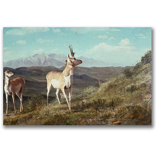 "Trademark Fine Art ""Antelope"" Canvas Wall Art by Albert Biersdant"