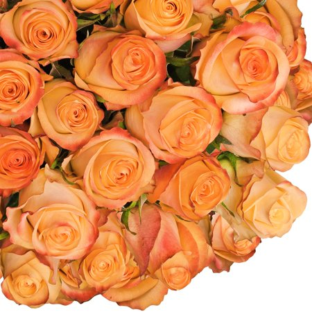 "Fresh Cut Peach Roses, 20"", Pack of 50 by InBloom Group"