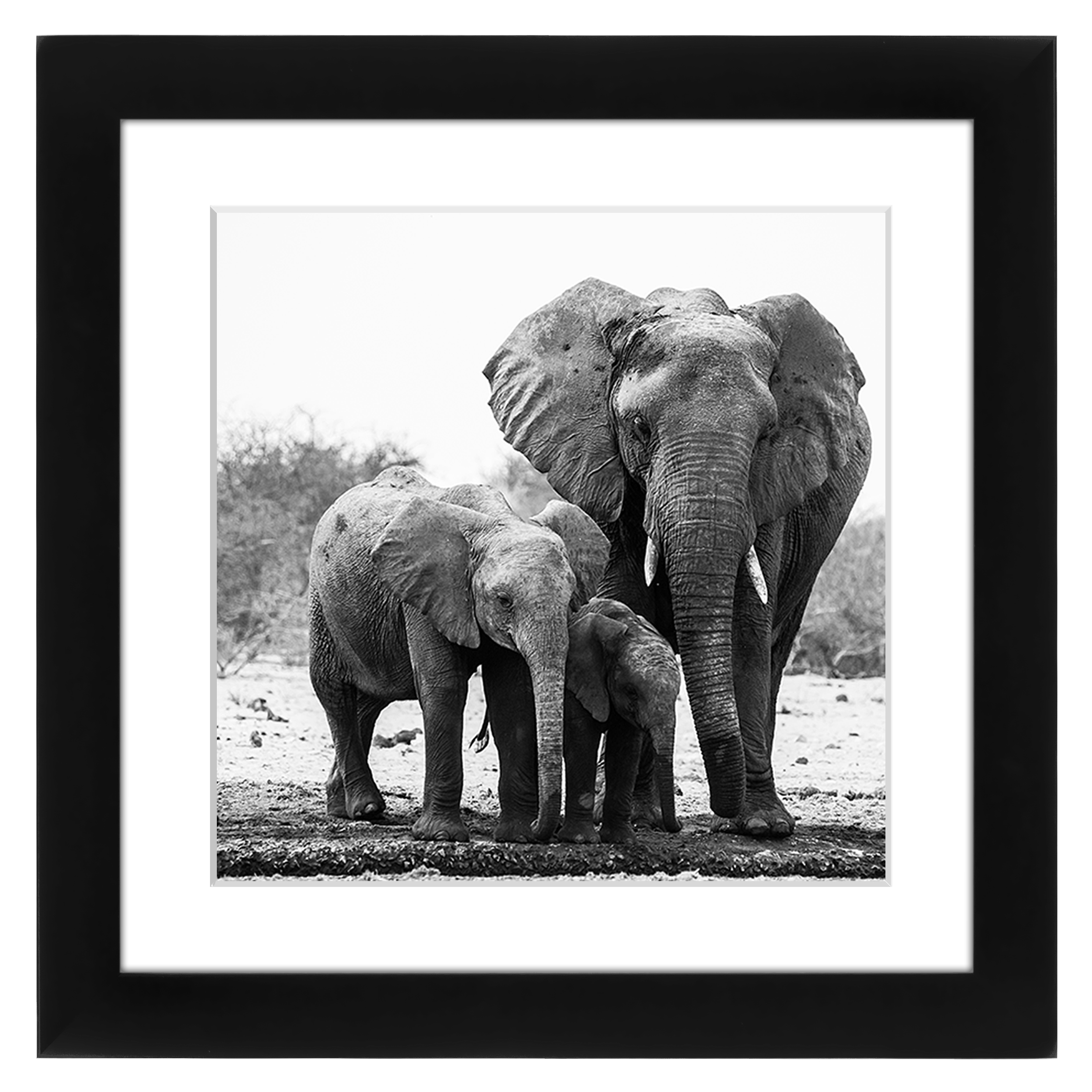 Americanflat 11x11 Black Picture Frame Matted to Fit Pictures 8x8 Inches or 11x11 Without... by Supplier Generic