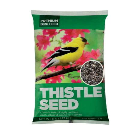 Premium Thistle Seed Wild Bird Feed, 5lbs (Best Way To Store Bird Seed)