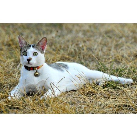 Canvas Print Animal Animals Feline Pets Cat Pet Kitten Stretched Canvas 10 x 14