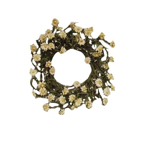 CWI Gifts Daisy and Pip Wreath, 20-Inch, Tea Stain