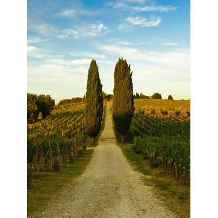 Late Summer Wine Scene in the Hills of Panzano, Tuscany, Italy Print Wall Art By Richard (Notting Hill Best Scene)