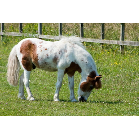 - Peel-n-Stick Poster of Pretty Pony Eating Equine Grazing Horse Animal Poster 24x16 Adhesive Sticker Poster Print