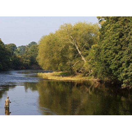 Trout Fisherman Casting to a Fish on the River Dee, Wrexham, Wales Print Wall Art By John