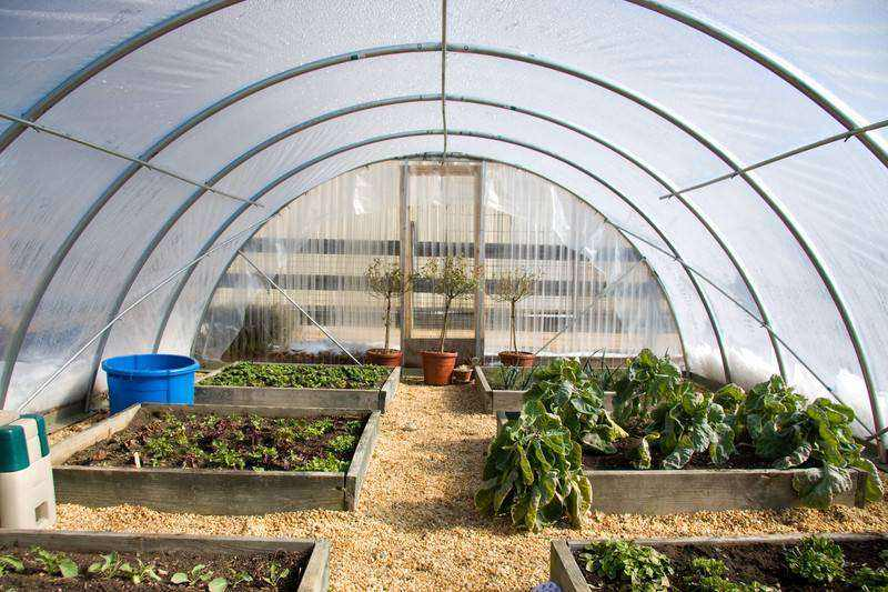 Greenhouse Film-10' x 14'-4 Year UV Resistance-Clear-6 mil thickness by