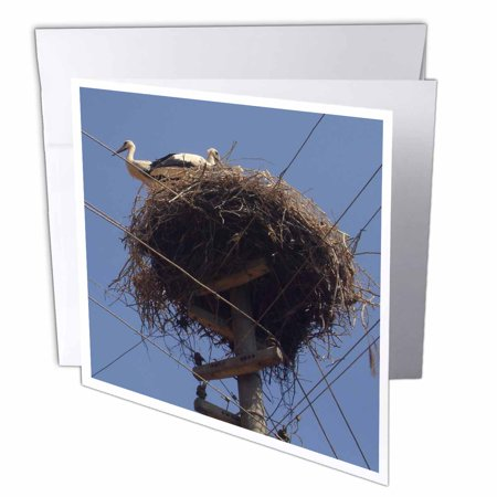 New Arrivals Baby (3dRose White Stork - white stork, stork, ciconia ciconia, bird,white, nest, folklore, new arrival, new baby, Greeting Cards, 6 x 6 inches, set of)