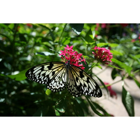 LAMINATED POSTER Wings Insect Butterfly Garden Nature Bloom Flower Poster Print 24 x 36