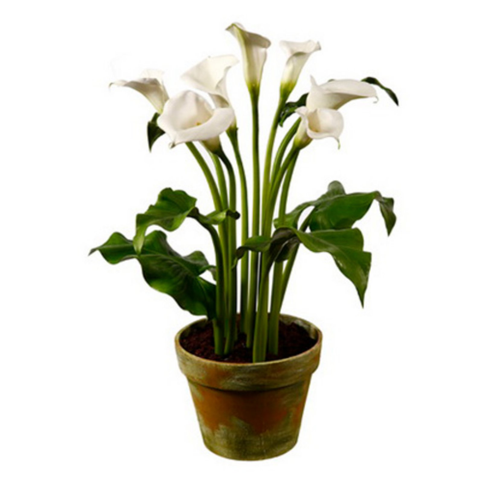Jane Seymour 30 in. Large Silk Calla in Clay Pot