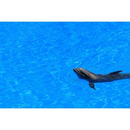Laminated Poster Pool Mammal Delfin Fins Blue Water Preview Swim Poster Print 24 X 36