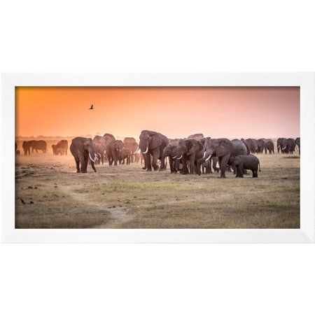 Amboseli Morning Stroll to Starbucks Framed Photographic Print Wall ...