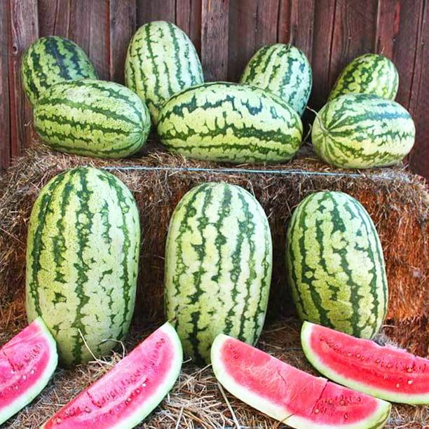 Klondike Striped Blue Ribbon Watermelon - 2 g ~16 Seeds ...