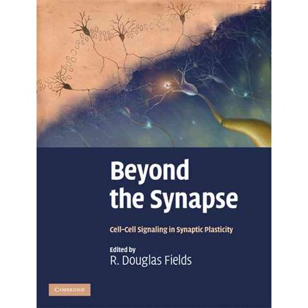 Beyond The Synapse  Cell Cell Signaling In Synaptic Plasticity