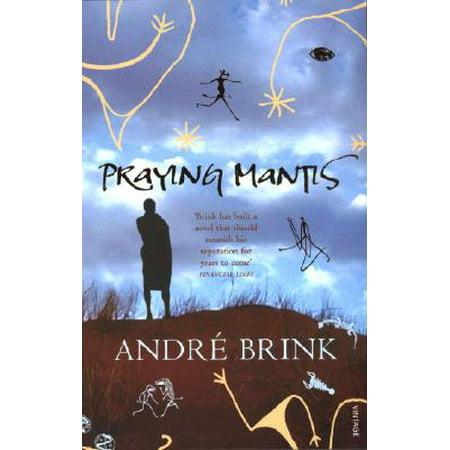 Praying Mantis](Praying Mantis As A Pet)