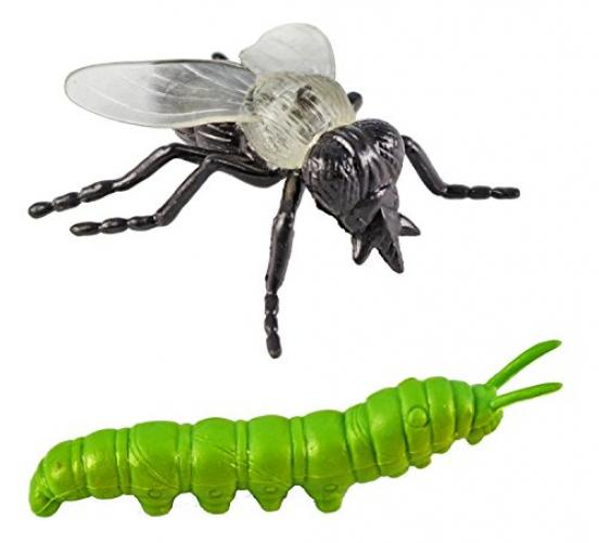 Safari Ltd Insects TOOB With 14 Toy Figurines Including a Caterpillar, Dragonfly, Centipede, Grasshopper,... by Safari Ltd.