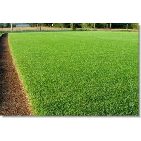SeedRanch Perennial Ryegrass Seed - 5 Lbs.