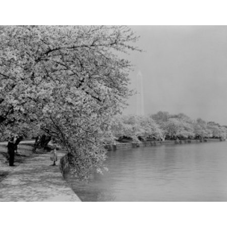 USA Washingotn DC Washington Monument with cherry trees in blossom around Tidal Basin Canvas Art -  (18 x (Best Way To See Washington Dc Monuments)