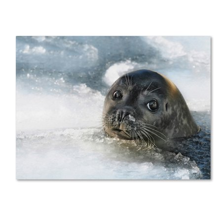 Trademark Fine Art 'Do You Have A Fish' Canvas Art by Holger - Do Fish Have Balls