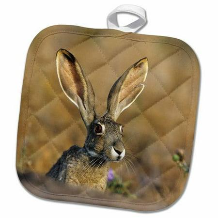 Texas Holdem Nuts - 3dRose Tailed Jack Rabbit Starr County Texas Pot Holder