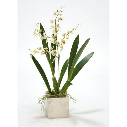 Distinctive Designs Oncidium Orchid in Square Nickle Planter (Set of 2)