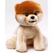 Boo-World's Cutest Dog