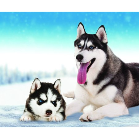 Husky Dog Fleece Throw Blanket 50