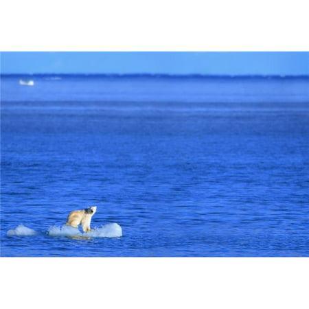 Polar Bear Ursus Maritimus Standing On A Piece of Floating Ice - Coburg Island, Nunavut, Canada Poster Print, 34 x 22 - - Canadian Ice
