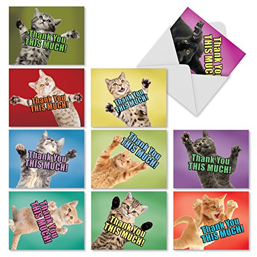 'M2368TYG CAT BIG THANKS' 10 Assorted Thank You Note Cards Featuring Adorable and Loving Cats Offering to Give You a Hug with Envelopes by The Best Card Company