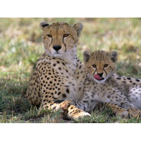 Cheetah Mother and Cub Resting in Shade Together Print Wall Art By John Eastcott & Yva Momatiuk