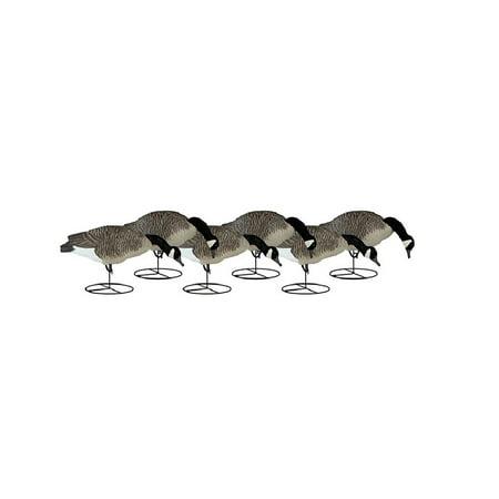 Pets Signature Series Feeder (Dakota Decoy 19300 Signature Series Canada Goose Flocked Feeder 6 Pack)